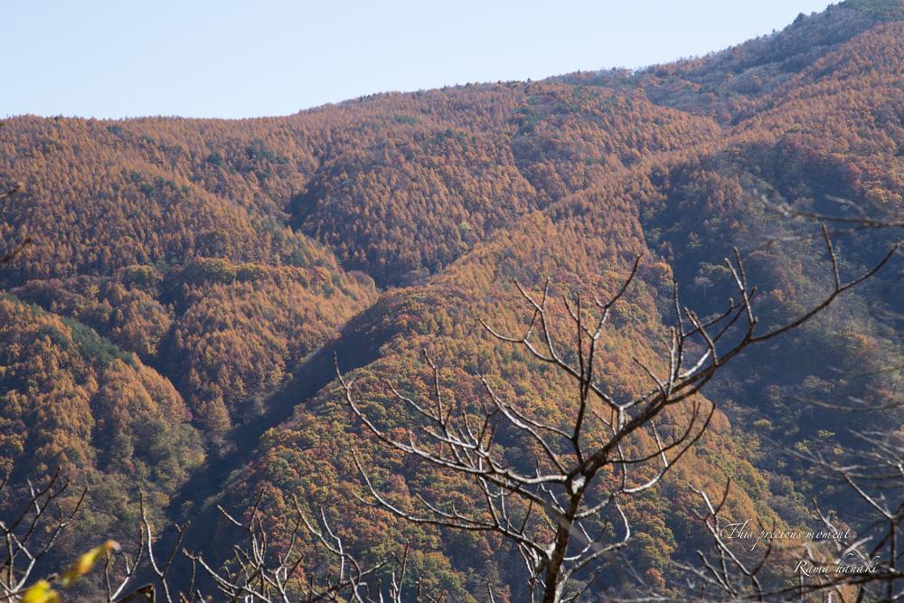 11/5 とちの木から南アルプス方面へ林道を入る_c0137403_15522984.jpg