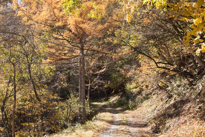 11/5 とちの木から南アルプス方面へ林道を入る_c0137403_15524366.jpg