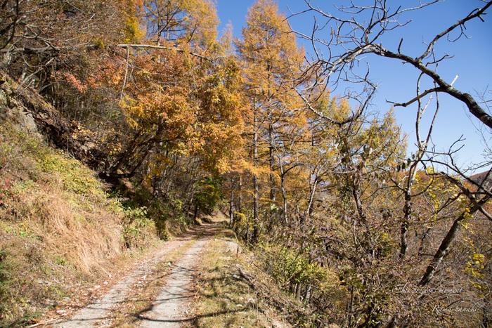 11/5 とちの木から南アルプス方面へ林道を入る_c0137403_15524932.jpg