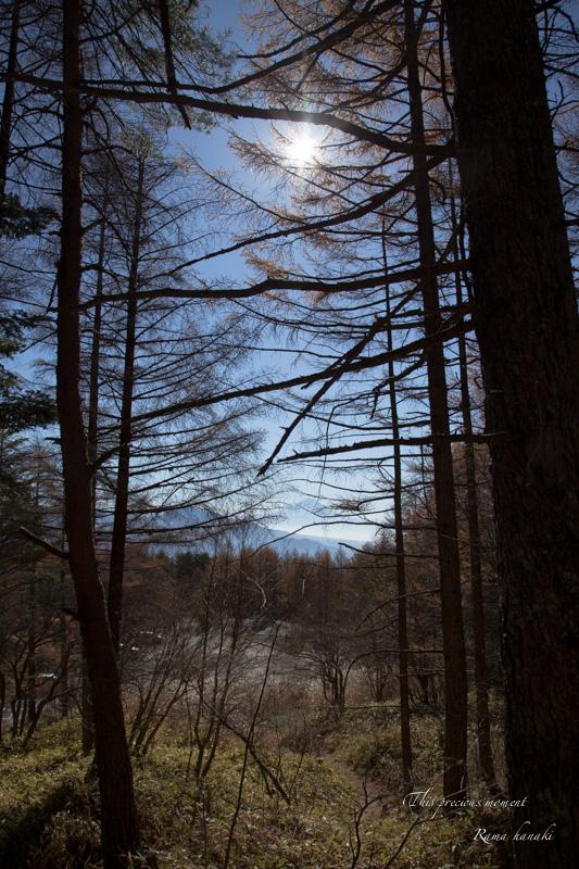 11/6 天女平から富士の絶景〜原村へ_c0137403_16223862.jpg