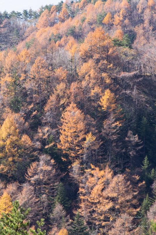 11/6 天女平から富士の絶景〜原村へ_c0137403_16224712.jpg
