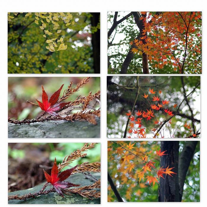紅葉ちらほら_d0147812_15335274.jpg
