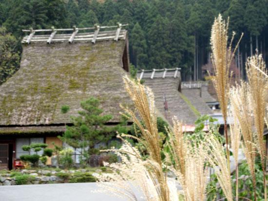 紅葉だより13 熊野神社と茅葺きの里_e0048413_1812247.jpg