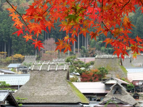 紅葉だより13 熊野神社と茅葺きの里_e0048413_18123668.jpg