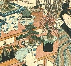 黒松盆栽ワークショップ風景_d0263815_1930278.jpg