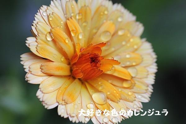 a0067720_2012446.jpg