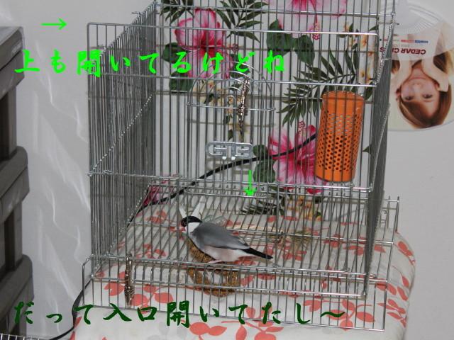 c0365734_20001446.jpg