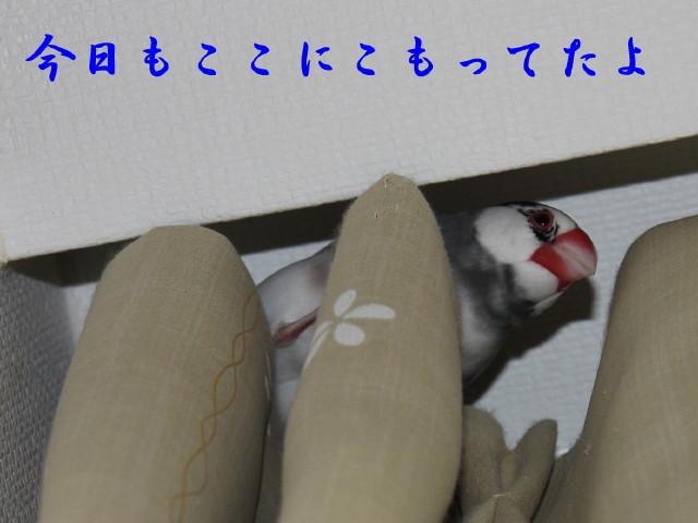 c0365734_20003614.jpg