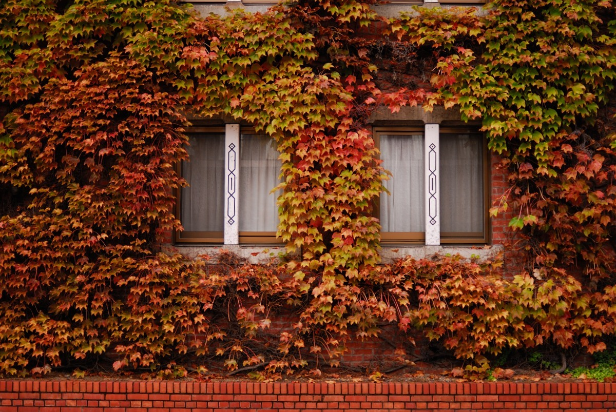 秋の美観地区♪_f0224648_15081345.jpg
