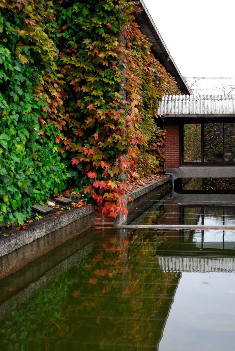 秋の美観地区♪_f0224648_15084434.jpg