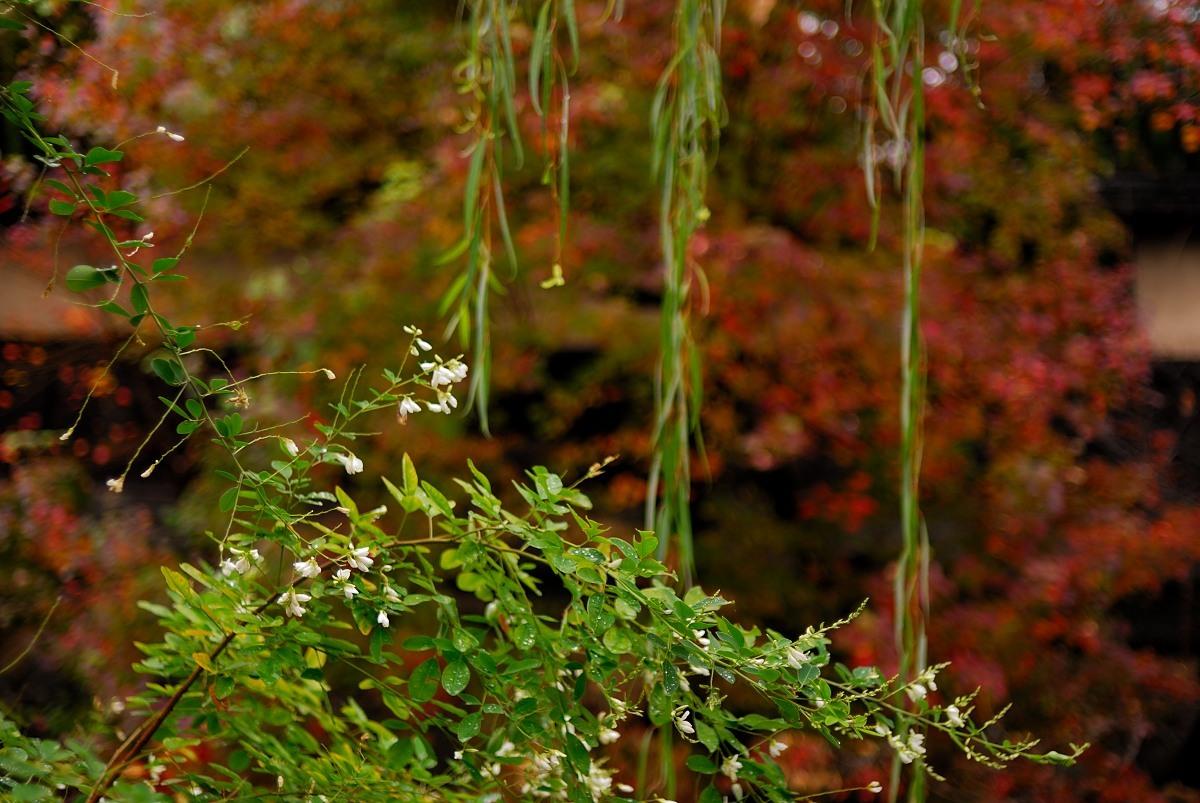 秋の美観地区♪_f0224648_15112313.jpg
