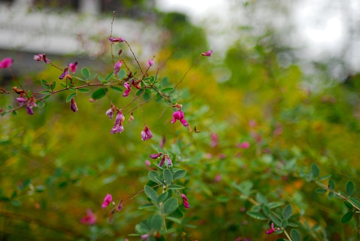 秋の美観地区♪_f0224648_15113185.jpg