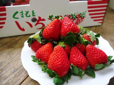 熊本イチゴ『さがほのか』 12月上旬より販売に向け、玉出し作業を現地取材!_a0254656_19184134.jpg