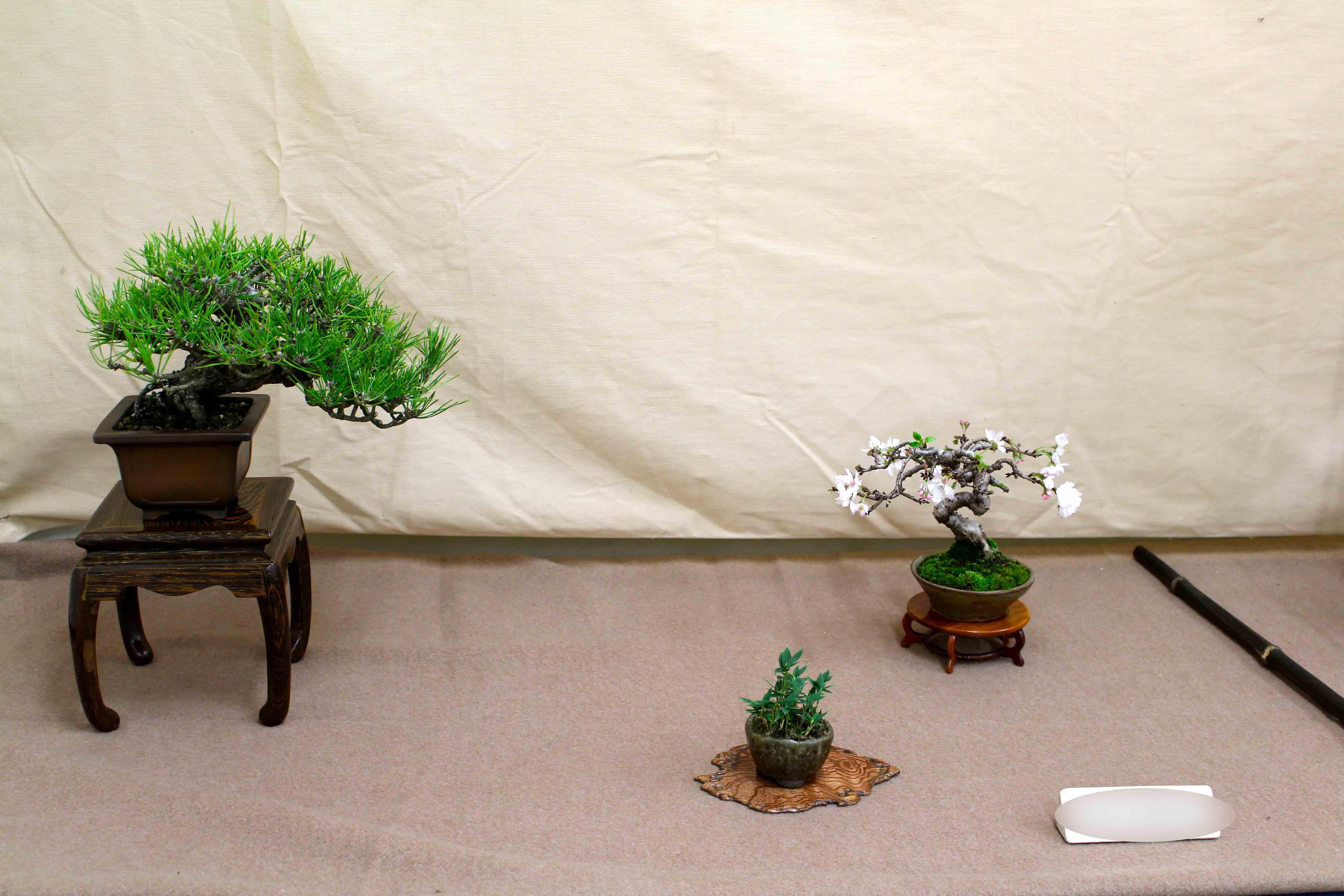 小品盆栽展示会 _e0298782_17291532.jpg