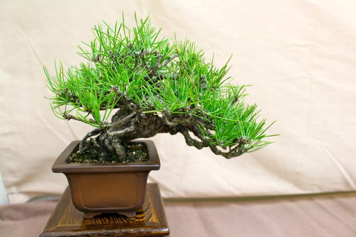 小品盆栽展示会 _e0298782_17294277.jpg