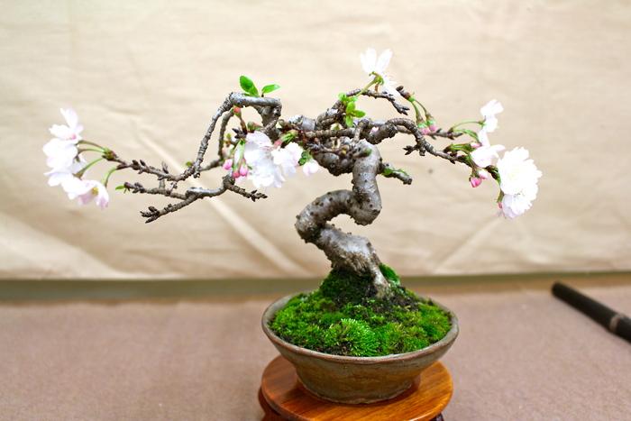 小品盆栽展示会 _e0298782_17302116.jpg