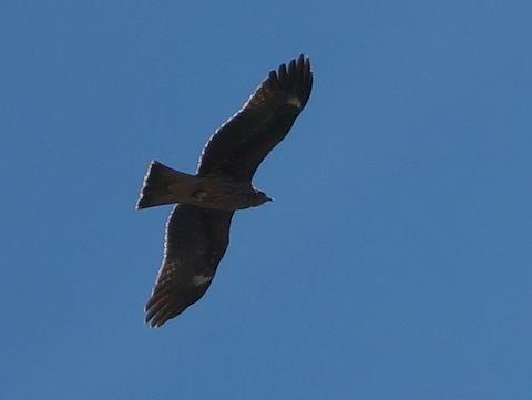 fly,fly,fly._d0343297_08280112.jpg