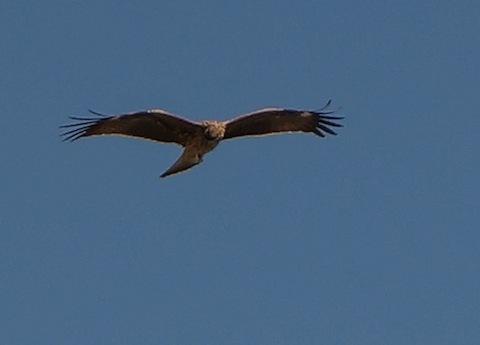fly,fly,fly._d0343297_08280151.jpg