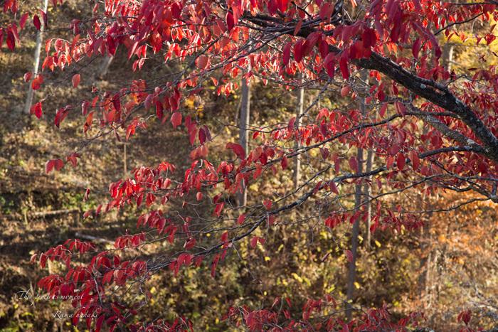 11/6 天女平から富士の絶景〜原村へ_c0137403_8441858.jpg