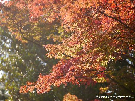 輝く色の響演☆木々の息遣い・・・♪_c0098807_21592568.jpg