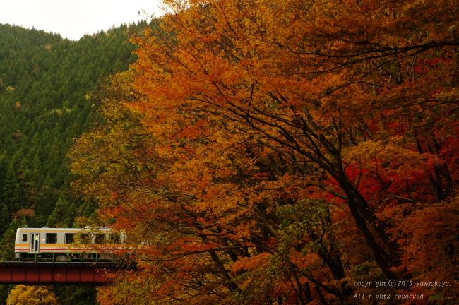 紅葉の朱色鉄橋を_d0309612_0551982.jpg