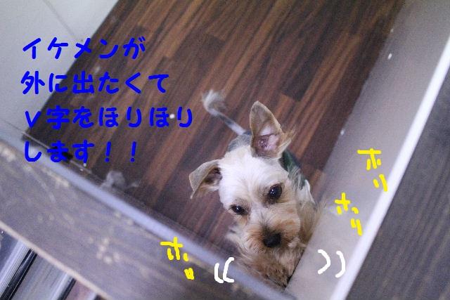 b0130018_22191477.jpg