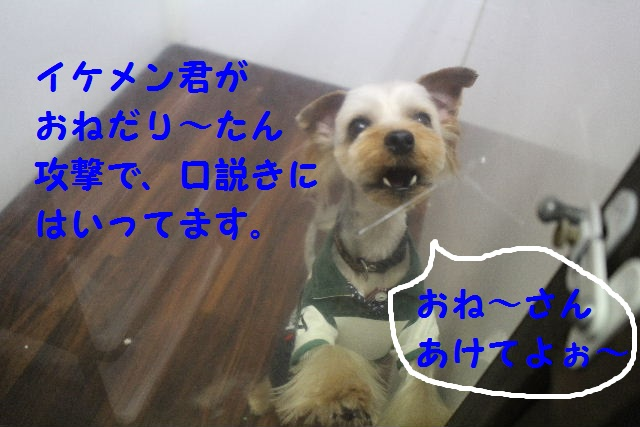 b0130018_22193993.jpg