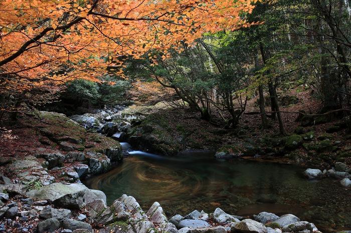 森の中でグルグル_a0294534_18271117.jpg