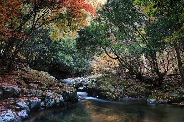 森の中でグルグル_a0294534_18275194.jpg