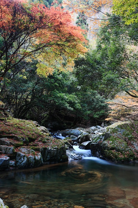 森の中でグルグル_a0294534_18294596.jpg