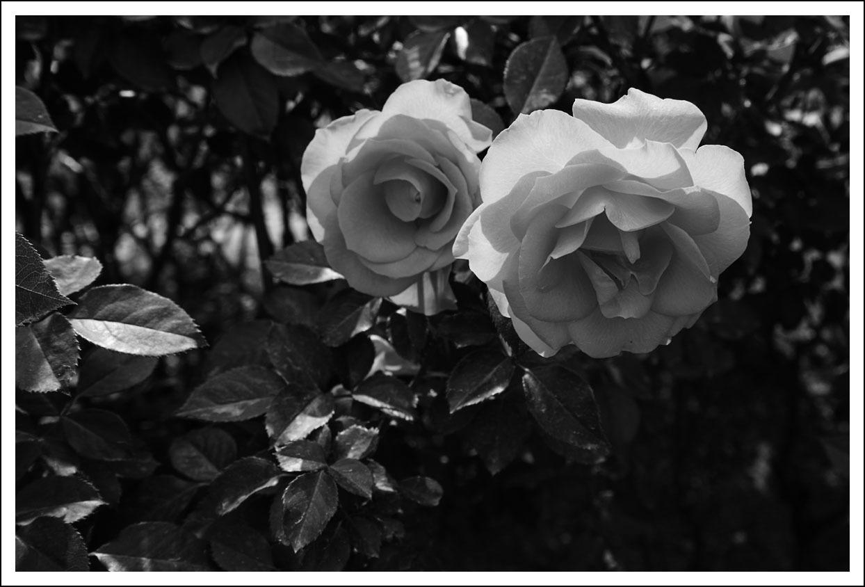京都府立植物園(7)_e0354867_19462049.jpg