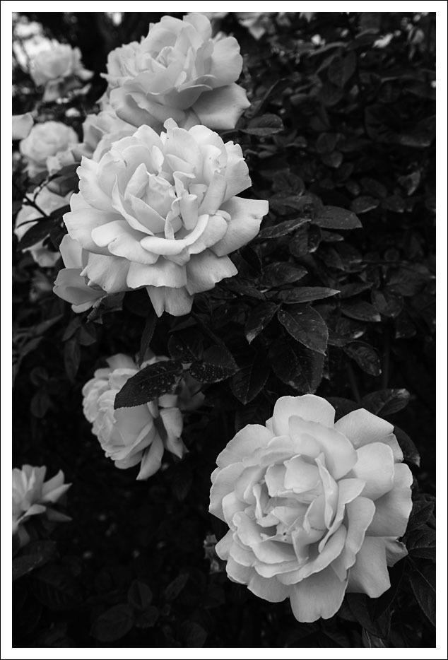 京都府立植物園(7)_e0354867_19464040.jpg