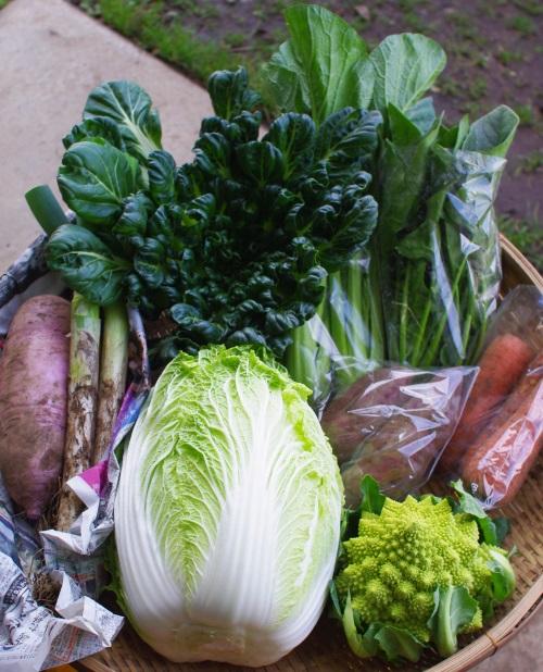 今週の野菜セット(11/17~11/21着)_c0110869_1511142.jpg