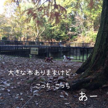 f0322570_16523001.jpg