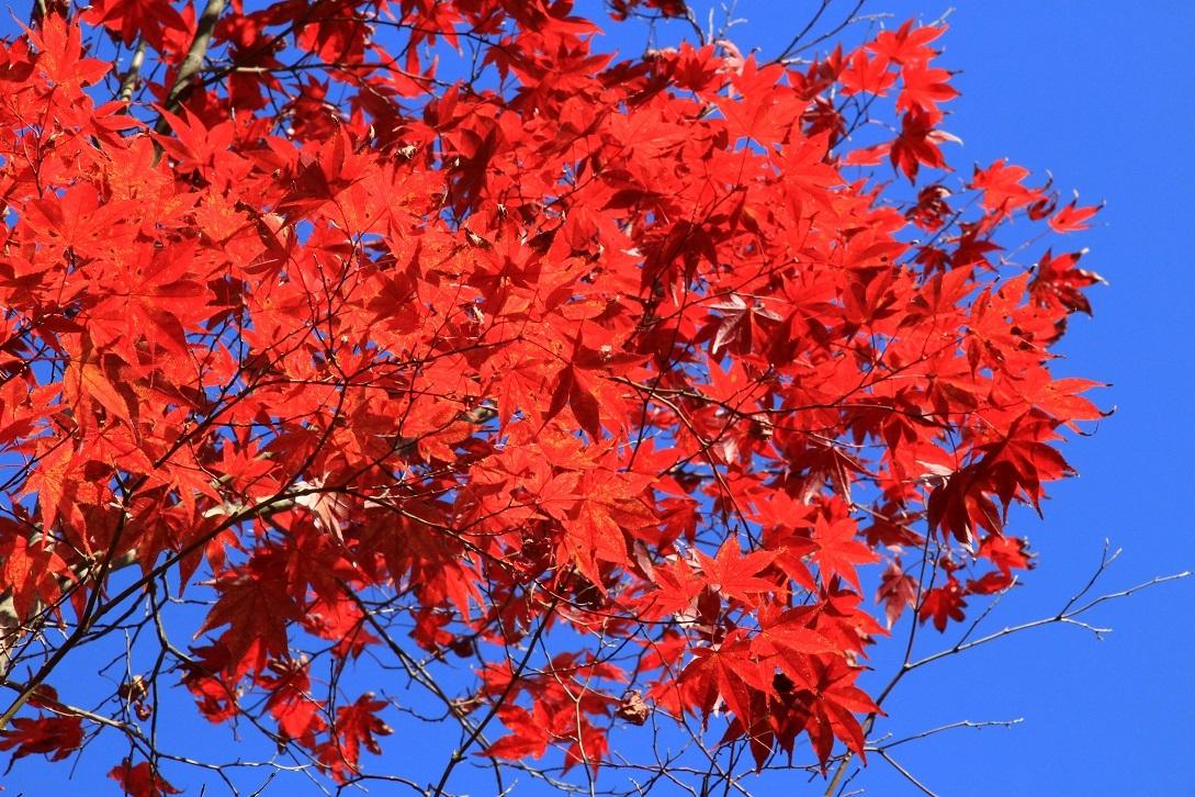 散る美学  ~永観堂の紅葉~_a0107574_17043183.jpg