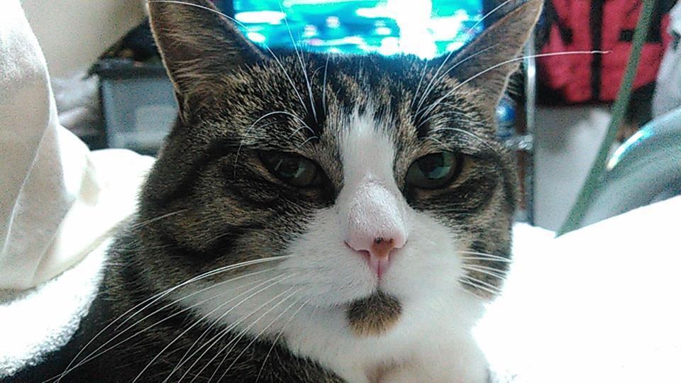 【猫】毎夜の事で・・_f0141609_7401934.jpg