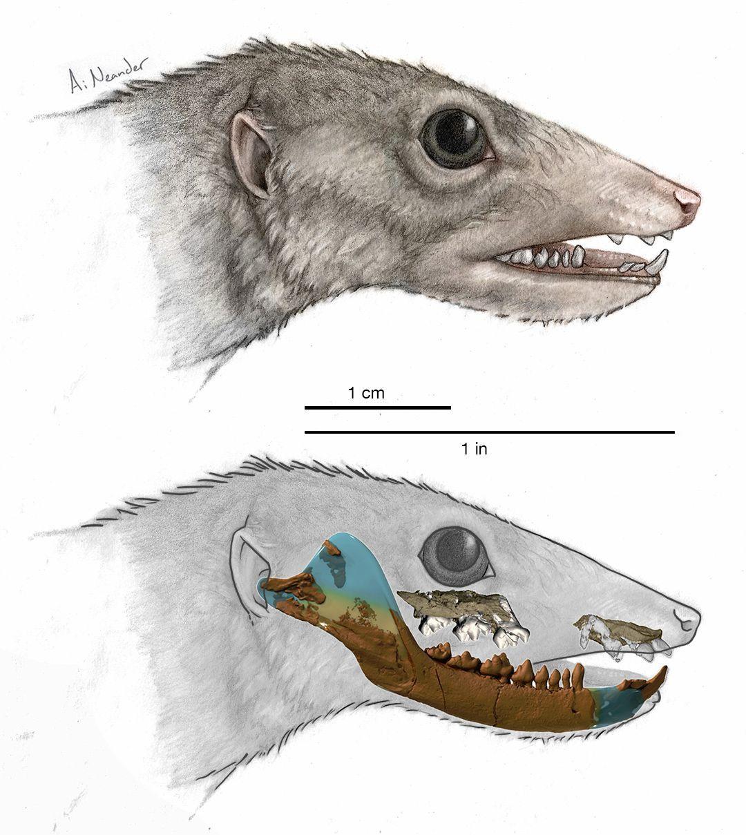ハイテク機器で再調査された「原始哺乳類」は「哺乳類以前」だった_c0025115_20003042.jpg
