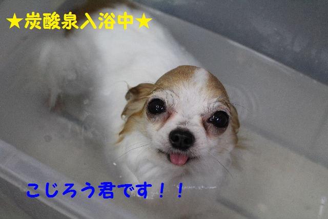 b0130018_883321.jpg