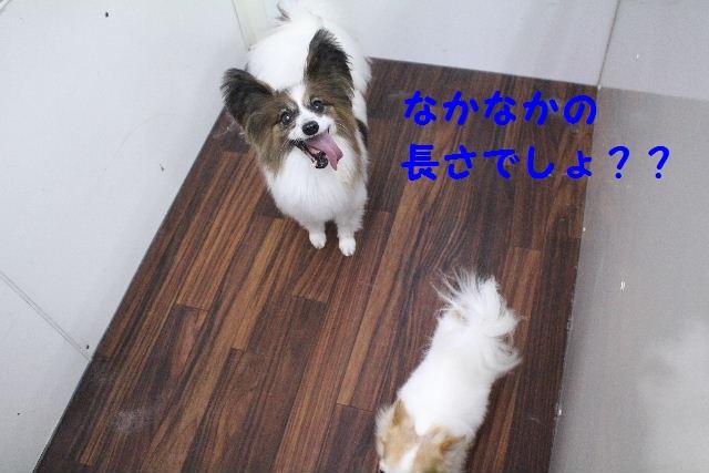 b0130018_894772.jpg