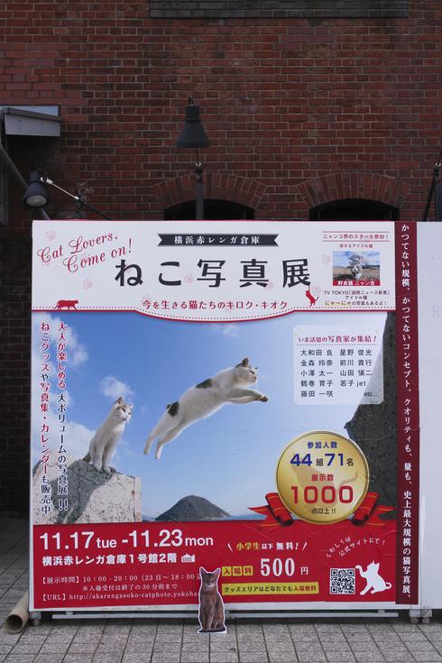 [猫的]ねこ写真展、今日開幕です。_e0090124_0185969.jpg