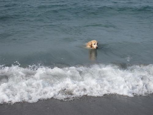ひさしぶりに海で遊んだよ~。_e0350927_17205246.jpg