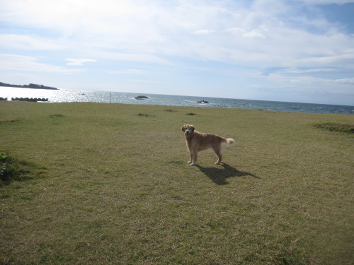 ひさしぶりに海で遊んだよ~。_e0350927_17341676.jpg
