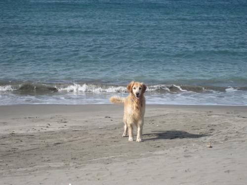ひさしぶりに海で遊んだよ~。_e0350927_17352483.jpg