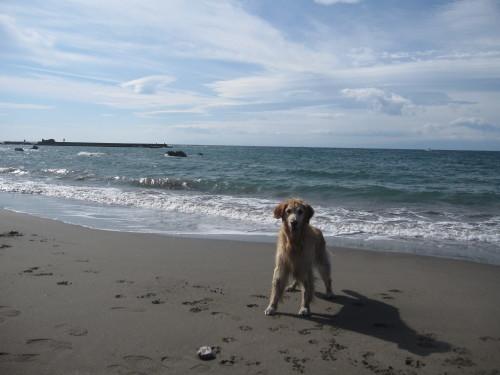 ひさしぶりに海で遊んだよ~。_e0350927_17382125.jpg