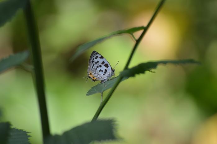 オフシーズン 今季初見の蝶達_d0254540_1820172.jpg