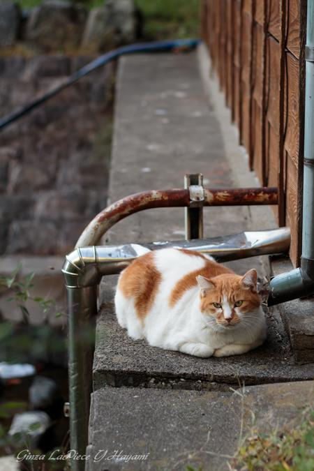 猫のいる風景 近所の子_b0133053_02136.jpg