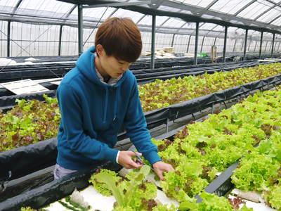水耕栽培 ほうれん草、サラダレタス、水菜!収穫と出荷の様子を取材してきました!!_a0254656_16482755.jpg