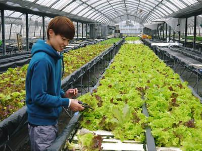 水耕栽培 ほうれん草、サラダレタス、水菜!収穫と出荷の様子を取材してきました!!_a0254656_16511055.jpg