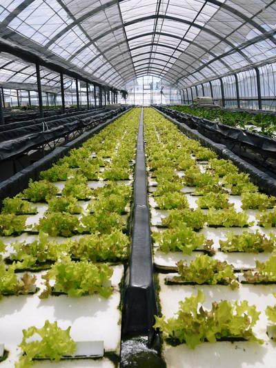 水耕栽培 ほうれん草、サラダレタス、水菜!収穫と出荷の様子を取材してきました!!_a0254656_17352831.jpg