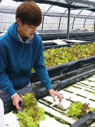 水耕栽培 ほうれん草、サラダレタス、水菜!収穫と出荷の様子を取材してきました!!_a0254656_17425136.jpg